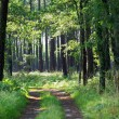 caminho na floresta — Foto Stock