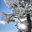 winterly trees — Stock Photo