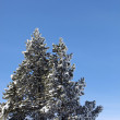 Snowy tree on a mountain - Stock Photo