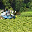 Stock Photo: A tractor in a vineyard