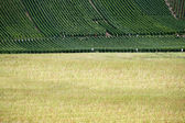A vineyard in the distance — Stock Photo