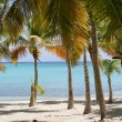 Palm trees — Stockfoto #11670568
