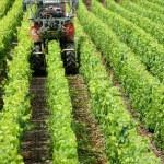 Vehicle in vineyard — Stock Photo #11672841