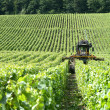 Stock Photo: Tractor in field of vines