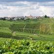 Hillside vineyard - Stock Photo