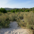 Greenery by beach — Stok Fotoğraf #11676088
