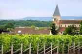 Vine field by a village — Stock Photo