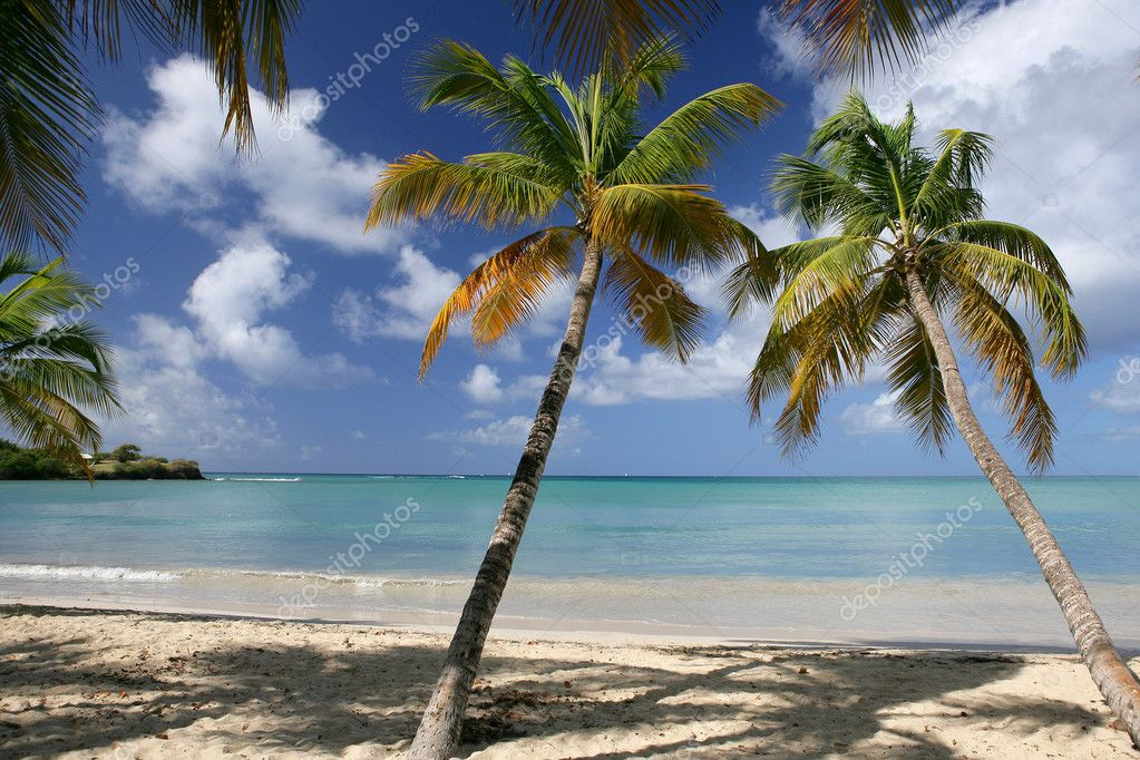 Perfect beach — Stock Photo #11671277