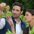 Stock Photo: Couple of wine growers