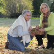 Senior women picking chestnuts — Stock Photo #11747665