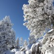 Stock Photo: White winter