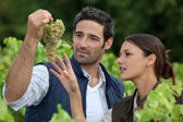 Couple of wine growers — Stock Photo