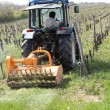 Tractor in vineyard - Stock Photo
