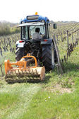 Tractor in vineyard — Stockfoto