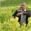 Senior man in vineyard — Stock Photo