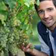 Stock Photo: Man stood by grape vine
