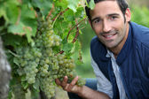 Man stood by grape vine — Stock Photo
