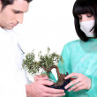 Two doctor with banzai tree — Stock Photo #11846352