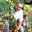 Collage of man and woman in their kitchen garden — Stock Photo