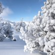 Winter wonderland — Foto de Stock