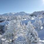 Picturesque winter scene — Stock Photo