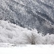 Snow covered hillside - Stock Photo