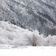 Snow covered hillside - Foto Stock