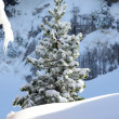 White winter — Stock Photo #11847694