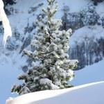 White winter — Stock Photo