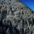 Hillside trees in winter — Foto de Stock