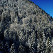 Stock Photo: Hillside trees in winter