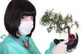Female doctor with banzai tree — Stock Photo