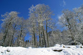 Snow covered trees on a sunny day — Stock Photo