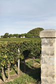 Gates to a vineyard — Stockfoto