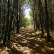 Rows of trees providing shade - Stock Photo