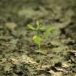 New Life — Stock Photo #11669644
