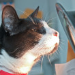 Cat with Sunlamp - Stockfoto
