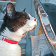 Cat with Sunlamp - Foto Stock