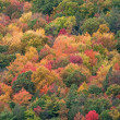 Fall Foliage — Stockfoto #12411737