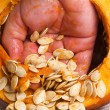 Pumpkin Seeds — Stock Photo #12413486