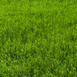Royalty-Free Stock Photo: Green grass on the lawn , grass texture