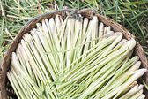 Lemon grass in backet — Stock Photo