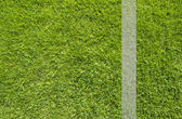 Green grass texture and background — 图库照片