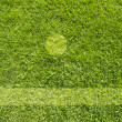 Green grass texture and background — Stock Photo #10808487