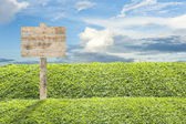 Wooden billboard on the grass background — Stock Photo