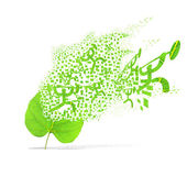 Green leaf of sport weight on white background — 图库照片