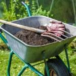 Gardening — Stock Photo #11043281