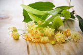 Linden blossom — Stock Photo