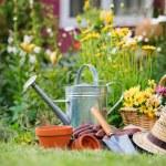 trädgårdsskötsel — Stockfoto #11439253