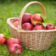 Fresh ripe apples in basket — Stock Photo